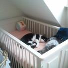 De kat heeft wat ontdekt Silvester heeft de ledikant ontdekt! Ojee